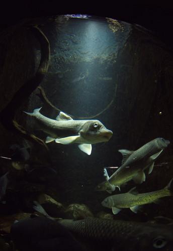 海南キモイ魚.jpg